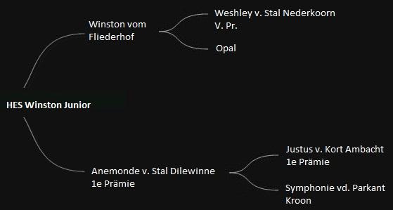 WinstonJr